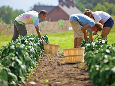 organic-farms